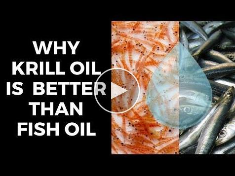 Ben's Wild Antarctic Krill Oil Review