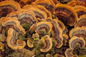 Primal Herb Reishi Shroom Complex - 100% Safe To Use?