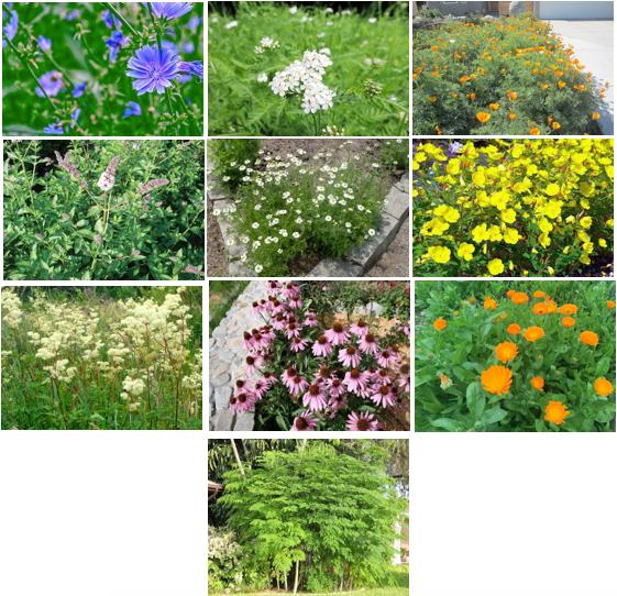 Medicinal Garden Kit Ingredients